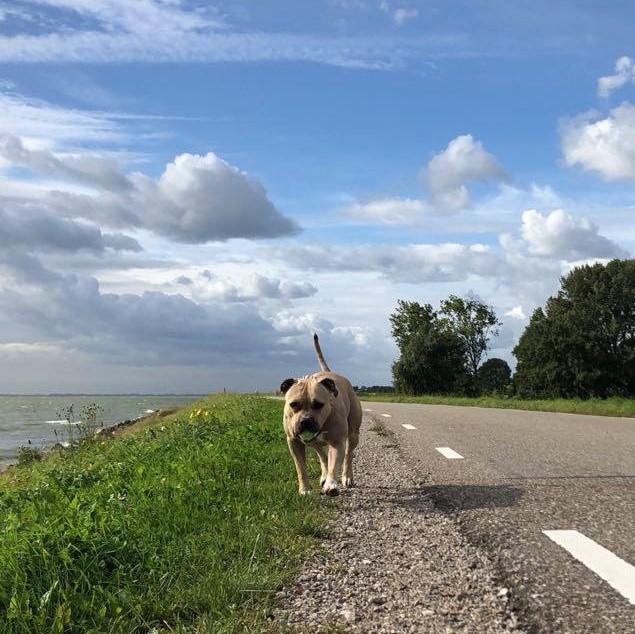Wandelen Westfriese Omringdijk
